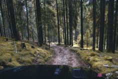 Jeep Wrangler Unlimited Rubicon 2019 franchissement forêt nature